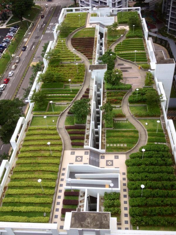 покривна градина с растения