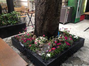 озеленяване и поддържане в софия