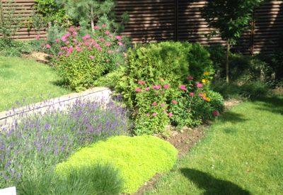 озеленяване на дворове и градини
