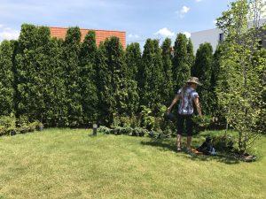 подрязване и оформяне на храсти и дървета